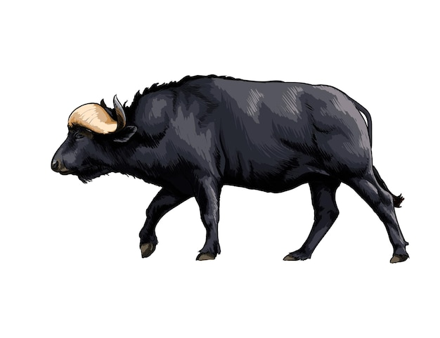 Акварель бизон, буйвол на белом
