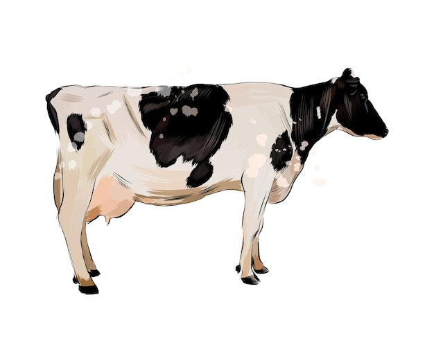 Watercolor black and white cow on white