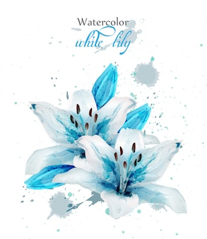 Watercolor blue lily flower