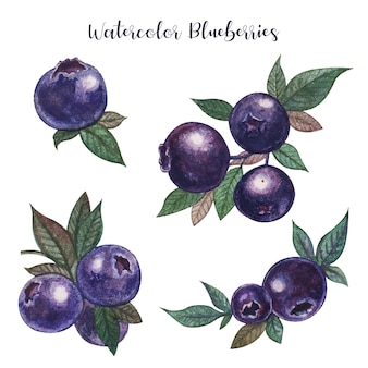 Watercolor blueberries realistic painting
