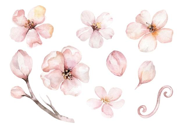Watercolor boho apple blossom flower set decorative floral bohemian design