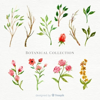 Watercolor botanical flower collection