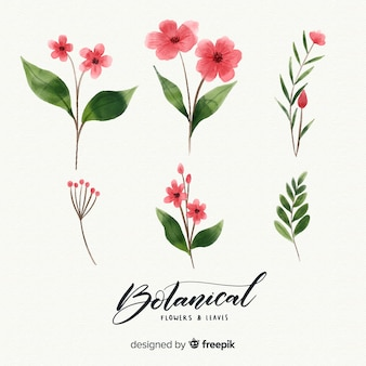 Watercolor botanical flowers and leaves