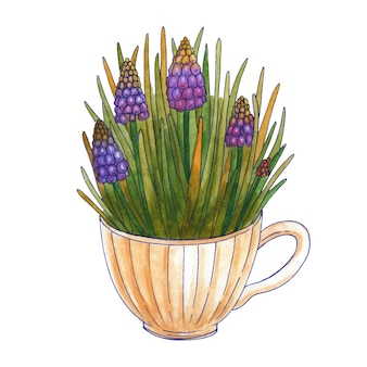 Watercolor bouquet of spring flowers. muscari and leaves in a tea cup. isolated on white background. hand drawn illustration.