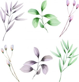 Watercolor branches with green and purple leaves