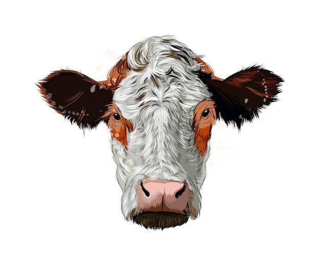 Watercolor brown cow head on white