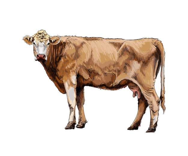 Watercolor brown cow on white