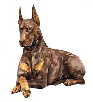 水彩の茶色のドーベルマン犬のピンシャー。黒と黄褐色のドーベルマン色。