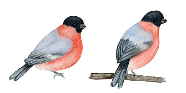 水彩ウソクリスマス鳥セット。手描きのイラスト。