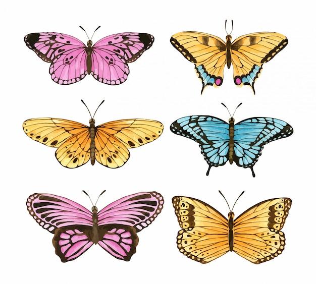水彩蝶セット