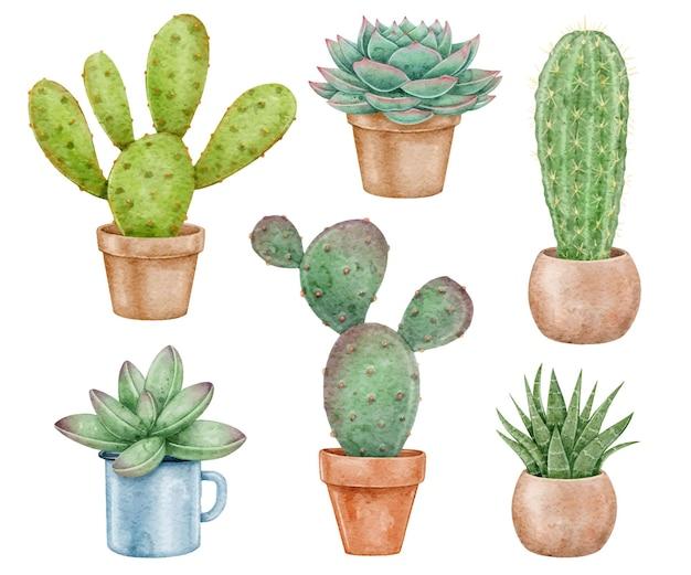 Акварельные кактусы и суккуленты акварельные иллюстрации