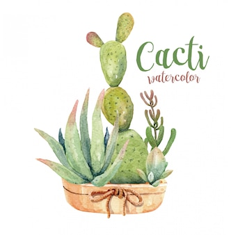 Watercolor cacti and succulents set with pot.