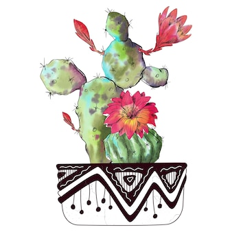 Watercolor cactus isolated on white background