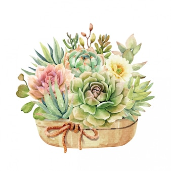 Watercolor cactus and succulent in pot and rope ribbon.