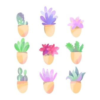 Collezione di cactus e piante grasse ad acquerello