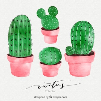 Watercolor cactus with cute style
