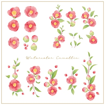 Watercolor camellia flowers collection vector