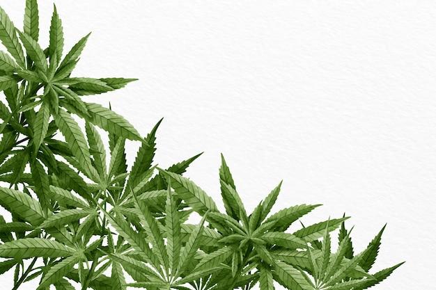 수채화 대마초 잎 배경