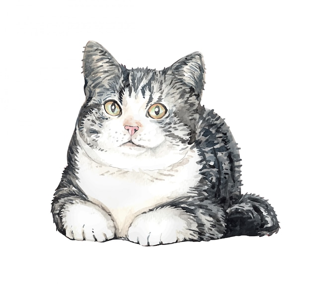 Watercolor cat american shorthair. cat squat.