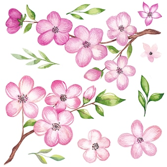 Watercolor cherry blossom branches and flowers