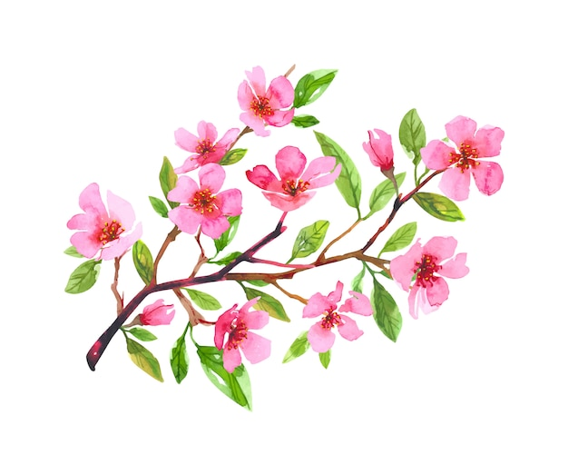 Watercolor cherry blossom flower wreath. sakura beautiful spring floral hand drawn art. colorful illustration isolated on white background.