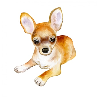 In watercolor of chihuahua dog