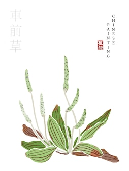 Watercolor chinese ink paint art illustration nature plant from the book of songs dooryard weed.