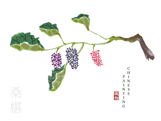 Watercolor chinese ink paint art illustration nature plant from the book of songs mulberry