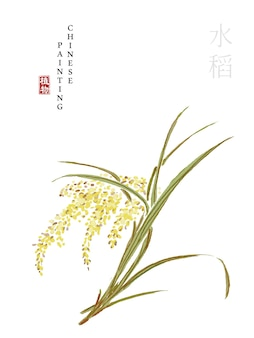 Watercolor chinese ink paint art illustration nature plant from the book of songs rice.