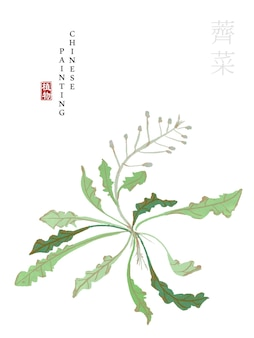 Watercolor chinese ink paint art illustration nature plant from the book of songs shepherd's purse.