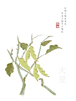 Watercolor chinese ink paint art illustration nature plant from the book of songs soya bean.