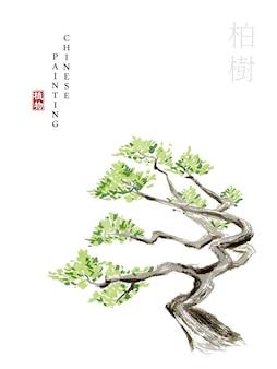 詩経オリエンタルヒノキの水彩画中国インクペイントアートイラスト自然植物。