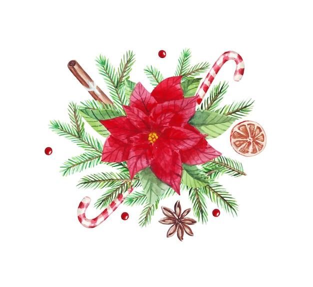 緑のモミの枝、ポインセチア、シナモン、キャンディー、カルダモンと水彩のクリスマスアレンジメント。