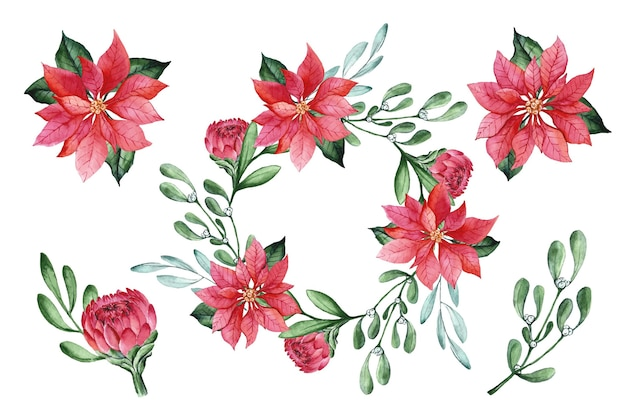 Watercolor christmas flower collection