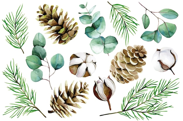 Watercolor christmas winter set cotton flowers eucalyptus leaves fir branches and cones