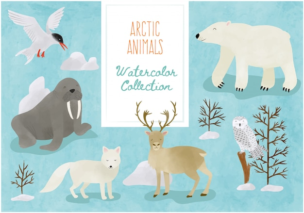 Watercolor collection - cute arctic animals