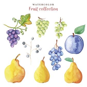 手の水彩画コレクションは秋の果物を描く