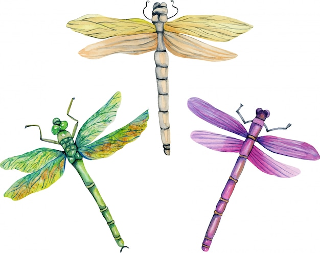 Watercolor colorful dragonflies illustration