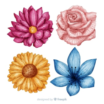 Watercolor colorful flowers and leaves collection