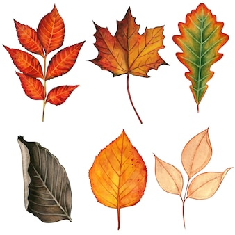 Watercolor colorful hand drawn fall leaves