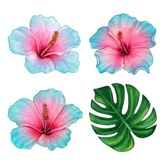 Watercolor colorful hand drawn hibiscus flower and tropical leaf set