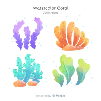 수채화 산호 컬렉션