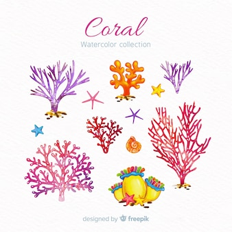 Watercolor coral collection
