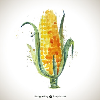 Watercolor corncob