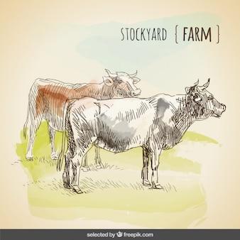 Акварель коров