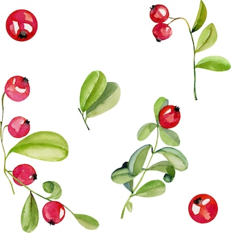 Watercolor cranberry berries illustration