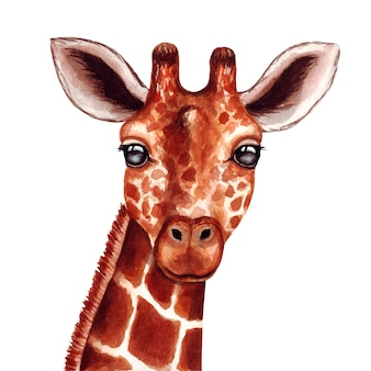 Watercolor cute giraffe face on white background.