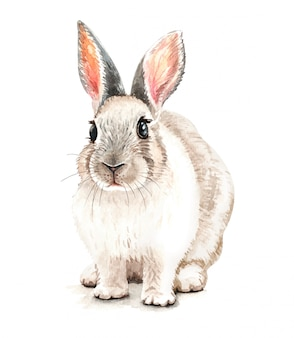 Watercolor cute rabbit illustration. t-shirt print.