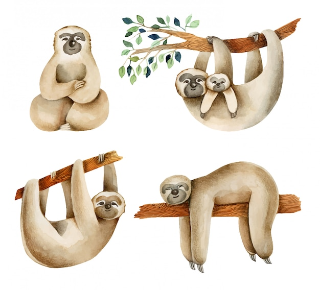 Watercolor cute sloths illustration, hand drawn