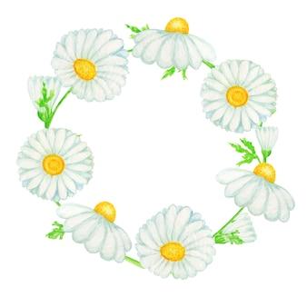 水彩デイジーカモミールの花フレームイラスト。コピースペースで分離された手描きの植物ハーブ